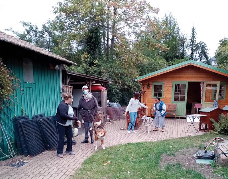 Balade dans la ferme avec des chiens